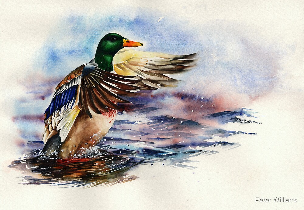 Sitting Duck by Peter Williams