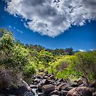 John Forrest National Park // 1 by Evan Jones