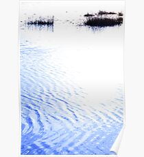 calm rippled water surface with rushes at sunset Poster