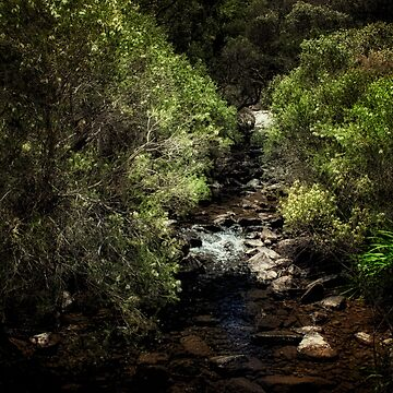 John Forrest National Park // 3 by EvanJ