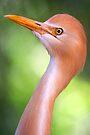 Cattle Egret by Stuart Robertson Reynolds