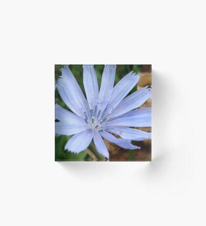 Wild Chicory Acrylic Block