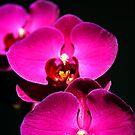 Orchid Trio by Terri~Lynn Bealle