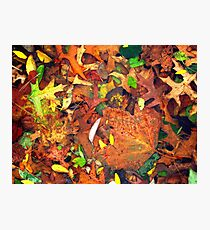Autumn puddle Photographic Print