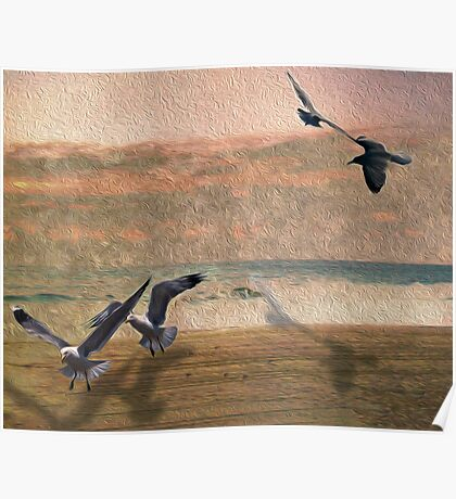 Seabirds At Setting Sun Poster