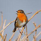 A Singing Robin by Dorothy Thomson