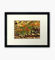 Forest Veil Framed Print