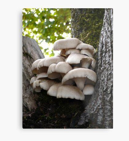 Oyster Mushroom Cluster Metal Print