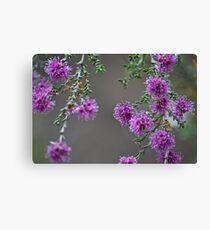 Conimbla Wildflower Leinwanddruck