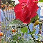 The Last Rose of Summer by TrendleEllwood