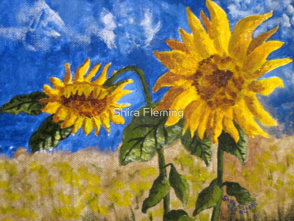 Sunflowers by Shira Fleming
