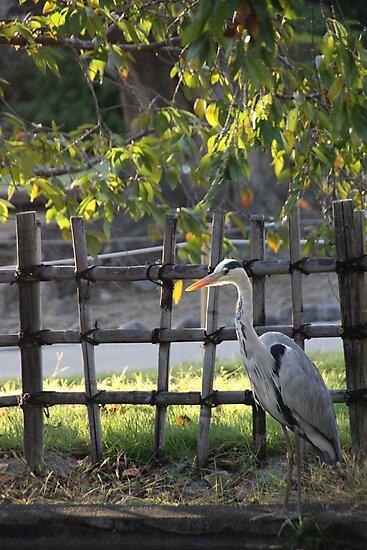 Egret by Cathie Tranent