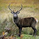 Monarch of the Glen1 by James Stevens