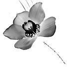 Black Orchid by James Stevens