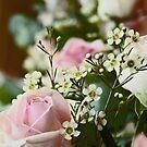 Roses 2 by James Stevens