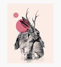 wild heart Photographic Print