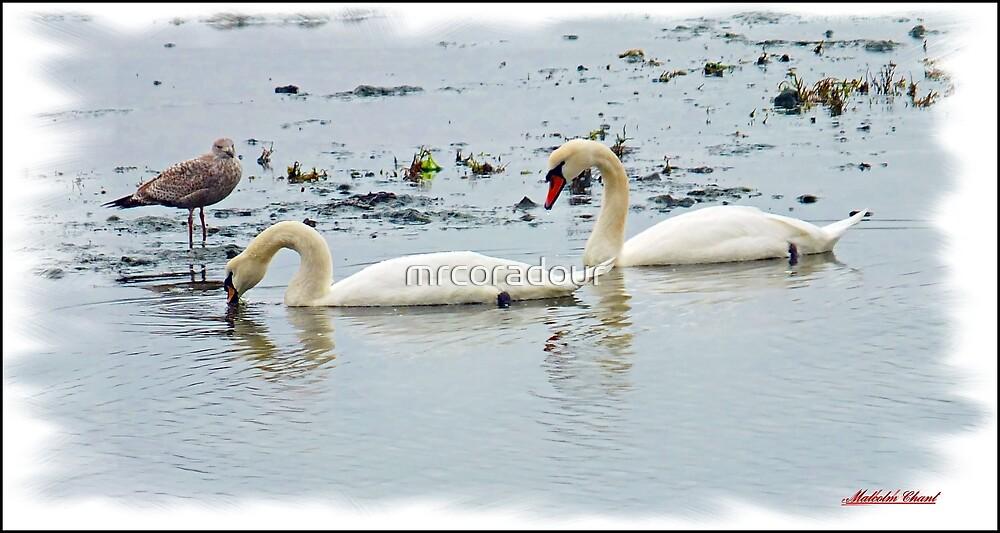 """"""" Swan Lake"""" by Malcolm Chant"""
