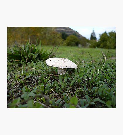 Meadow Mushroom Photographic Print