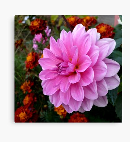 Pink and Orange Canvas Print