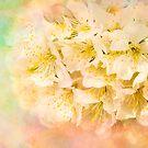 It is Written in the Blossoms by Marilyn Cornwell