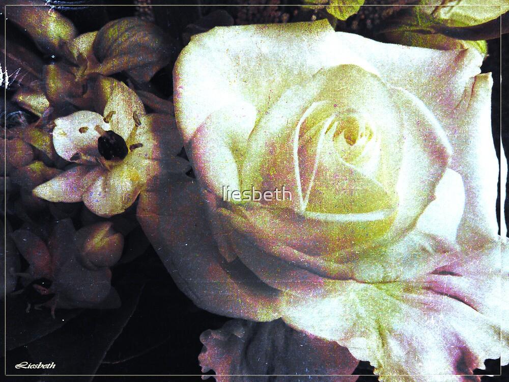 Antiqua by liesbeth