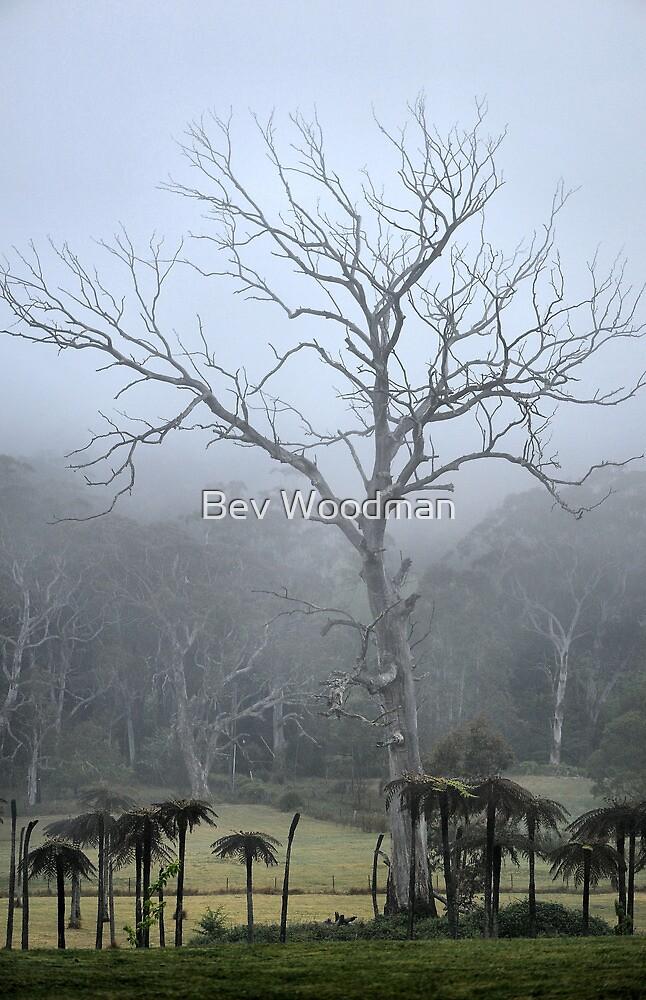 Prehistoric Tree - Mt Wilson NSW Australia by Bev Woodman