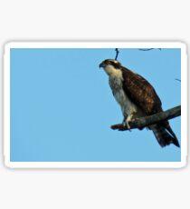 Hawk Perched Sticker