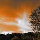 Halloween Sky by Alex Call