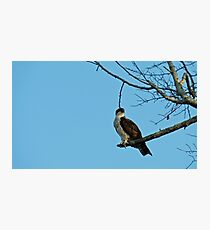 Hawk Perched 3 Photographic Print