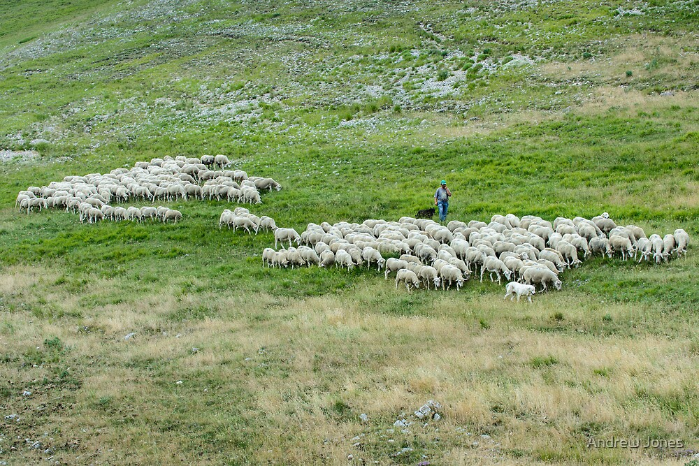 One man, three dogs and three hundred sheep, Piano Grande, Umbria by Andrew Jones