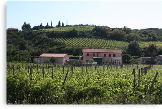 Vineyards on Elba by Christine Oakley