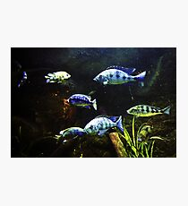 Fish Tank Photographic Print