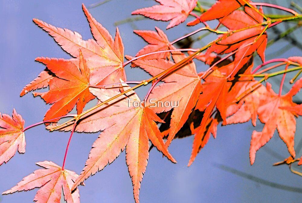 November Leaves by Tori Snow
