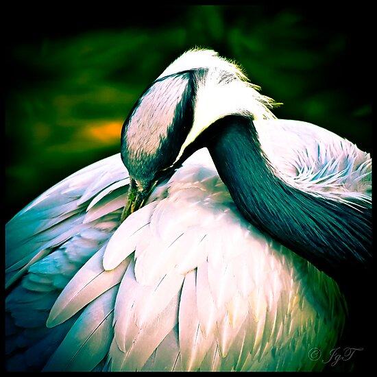 A Crane by johnjgt