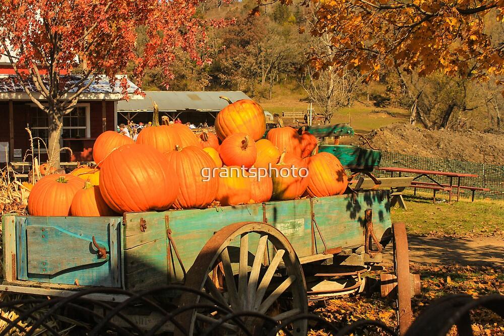 Autumn, down on the farm... by grantsphoto