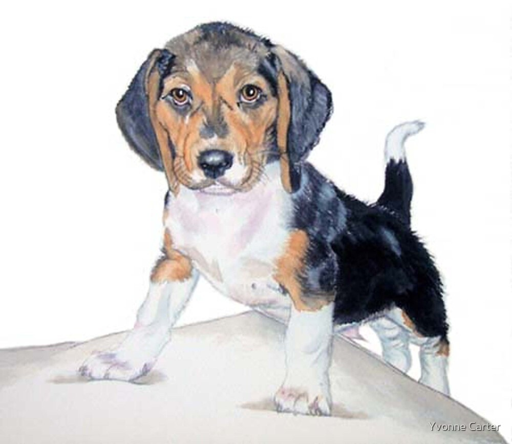 Bagel the Beagle by Yvonne Carter