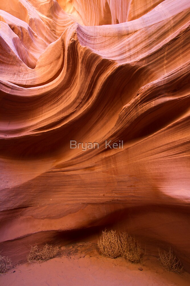 Tumble weed in canyon by Bryan  Keil