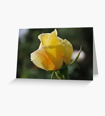 Yellow Rose Friendship Greeting Card