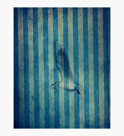 seagull in cyan Photographic Print