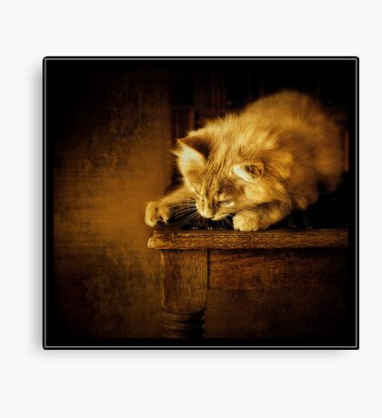Sittin' kitten Canvas Print