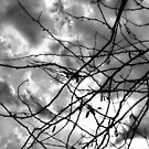 Storm Clouds Overhead by Dawne Dunton