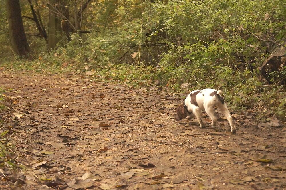 Dog in the woods by splatten