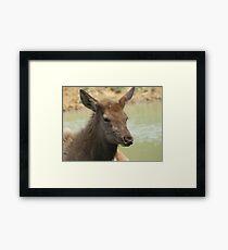 A Young Elk Bull 2 Framed Print