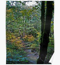 fall rains Poster