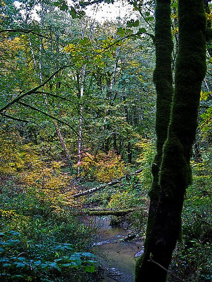fall rains by Bruce  Dickson