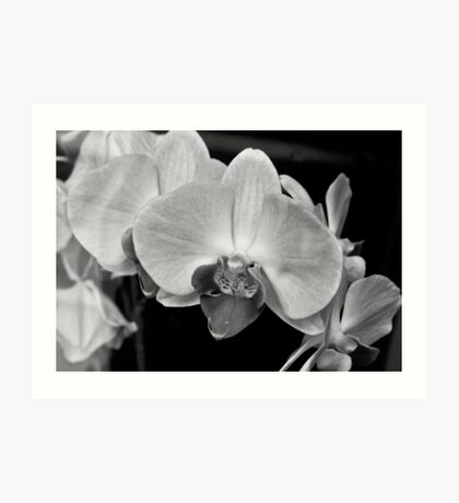 """""""Even though the world is filled with confusion, when I gaze at one orchid I can forget all my problems"""". - Song Sunam Art Print"""