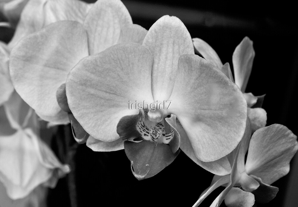 """""""Even though the world is filled with confusion, when I gaze at one orchid I can forget all my problems"""". - Song Sunam by irishgirl7"""