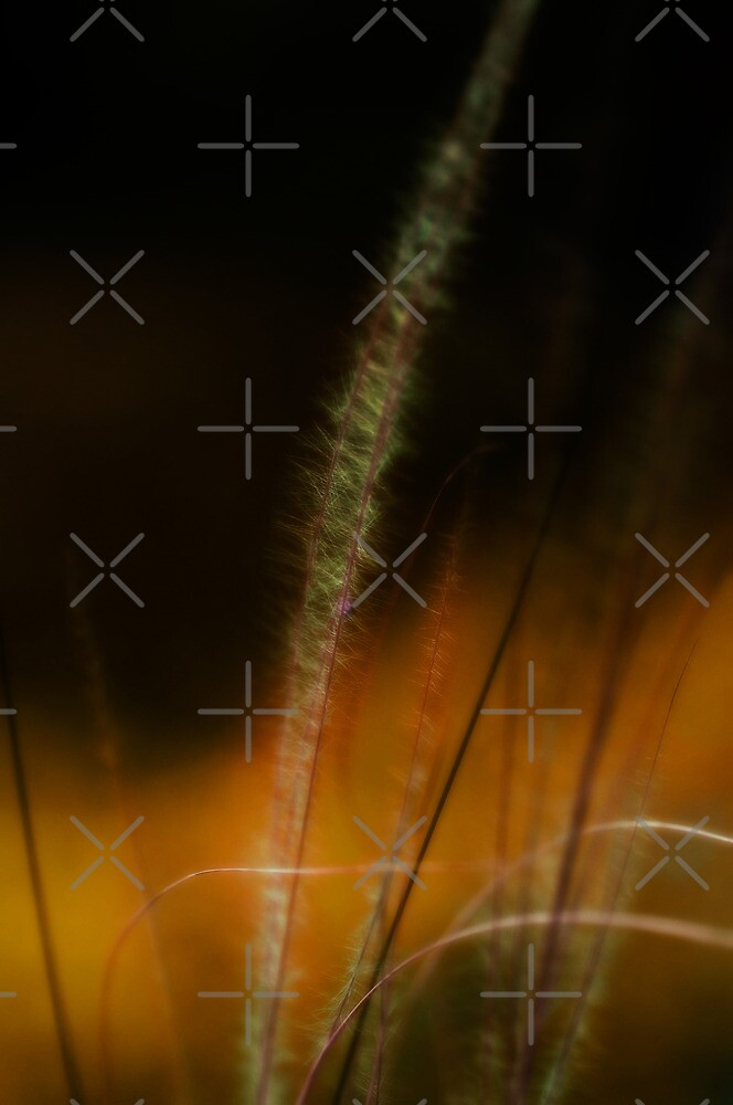 Soft grass by marina63