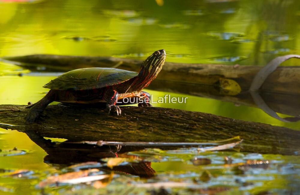 Turtle Nap by LouiseLafleur