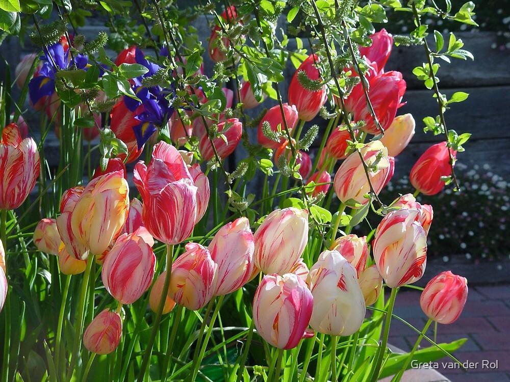 Tulips by Greta van der Rol
